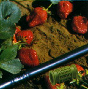 agricoltura gico